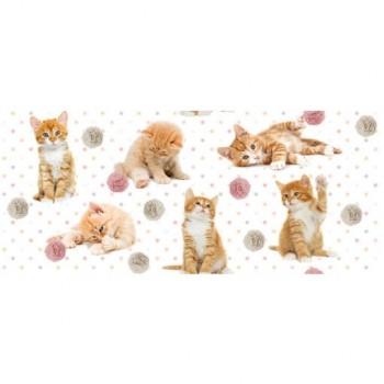 Котики - Рыжий кот.jpg